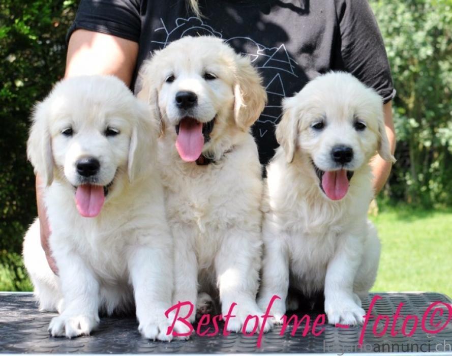 Golden Retriever Ultimi cuccioli disponibili GoldenRetrieverUltimicucciolidisponibili.jpg