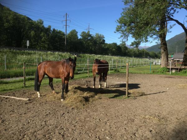 Avvicinamento al cavallo e introduzione all'equitazione 454539a.jpg