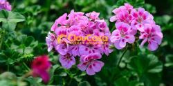 #620cloucasa Villino Pentafamiliare Aprilia- Fossignano 620cloucasaVillinoPentafamiliareApriliaFossignano123456789.jpg