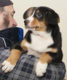 Allevamento Bovari Svizzeri Cà dal Pia vende cuccioli di Bovaro dell'Entlebuch