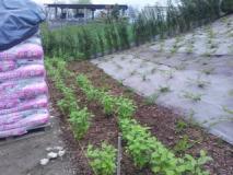 Giardiniere tutto fare