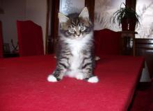 Regalo del mio gattino TICHATE.