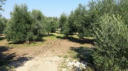 Terreno Agricolo TerrenoAgricolo-613f622f4db6e.jpg