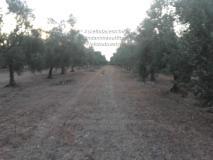 Terreno Agricolo TerrenoAgricolo12.jpg