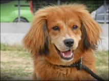WIGGY 10 mesi, la gioia di vivere fatta cane