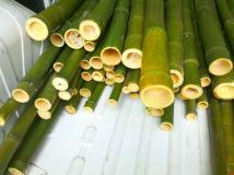 In vendita canne di bambù bambu con diametri da 1 a 10 cm. lunghezza da definire Invenditacannedibambbambucondiametrida1a10cmlunghezzadadefinire.jpg