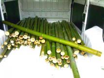 In vendita canne di bambù bambu con diametri da 1 a 10 cm. lunghezza da definire Invenditacannedibambbambucondiametrida1a10cmlunghezzadadefinire123.jpg