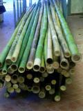 In vendita canne di bambù bambu con diametri da 1 a 10 cm. lunghezza da definire Invenditacannedibambbambucondiametrida1a10cmlunghezzadadefinire123456.jpg