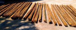 In vendita canne di bambù bambu con diametri da 1 a 10 cm. lunghezza da definire Invenditacannedibambbambucondiametrida1a10cmlunghezzadadefinire1234567.jpg