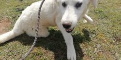 Giada dolcissima cucciolona in canile