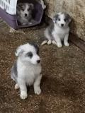 Meravigliosi cuccioli
