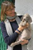 WEIMARANER splendidi cuccioli! Allevamento amatoriale Torino