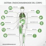 Gestione dolore /infiammazione
