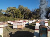 Cerco lavoro come apicoltore