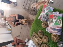 allevamento vende cuccioli di american...