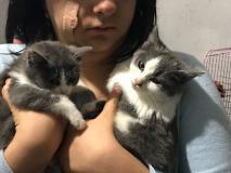 Stupenda gattina cucciola