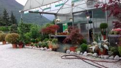 Vendo attività commerciale florovivaistica Vendoattivitcommercialeflorovivaistica.jpg