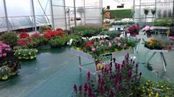 Vendo attività commerciale florovivaistica Vendoattivitcommercialeflorovivaistica123.jpg