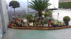 Vendo attività commerciale florovivaistica Vendoattivitcommercialeflorovivaistica123456.jpg