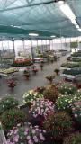 Vendo attività commerciale florovivaistica Vendoattivitcommercialeflorovivaistica12345678.jpg