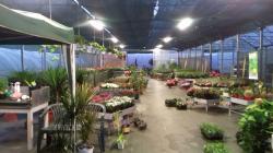 Vendo attività commerciale florovivaistica Vendoattivitcommercialeflorovivaistica123456789.jpg