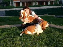 Dog sitter/ educazione cinofila OFFRESI