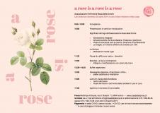 A rose is a rose   28.04.2019