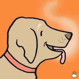 Cerco cane