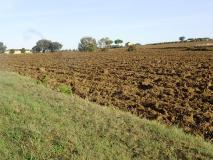 terreno agricolo con agriturismo