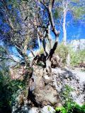In Sardegna a Baunei terreno edificabile vista Mare